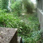 The overgrown yard as seen here.  A view looking down the side of the house.
