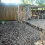 After the bamboo was removed and the stump grinder took care of the roots, we planted 3 red crepe myrtles.
