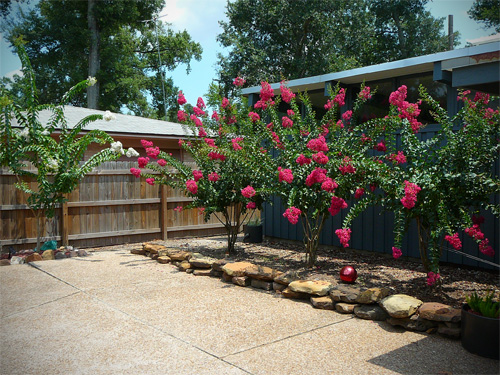 A nice view of the crepe myrtles in bloom.  I can't believe how much they've grown.  So much better than all that bamboo!
