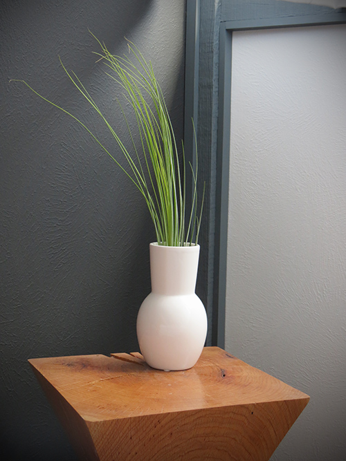 airplant - Juncea