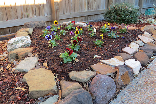 Pansy Flower Bed